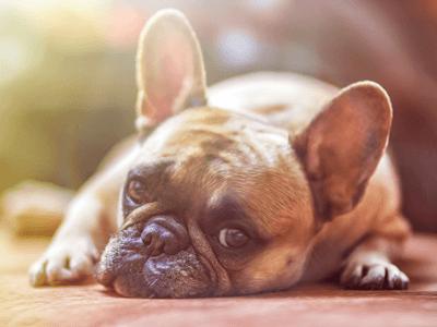 hund liebeskummer